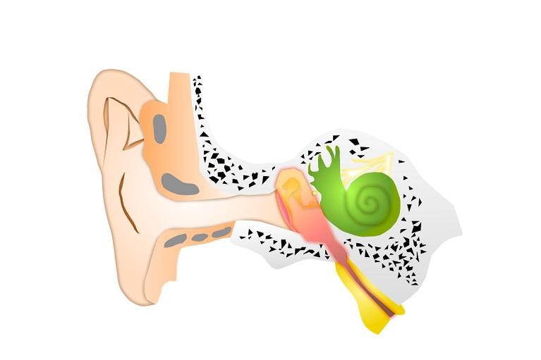 急性中耳炎病態