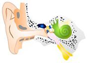 慢性中耳炎 真珠種性中耳炎